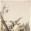 Giovanni Domenico Tiepolo (Italian 1727-1804), Owls on a Rocky Perch, c.  1770. Pen and grey ink  and grey and brown wash over traces of black chalk.  267 x 196 mm.