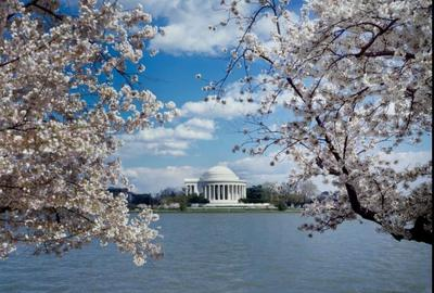 Jefferson Memorial with cherry blossoms, Washington, D.C.; photograph by Carol M.  Highsmith, b.  1946