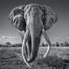 David Yarrow, Space for Giants