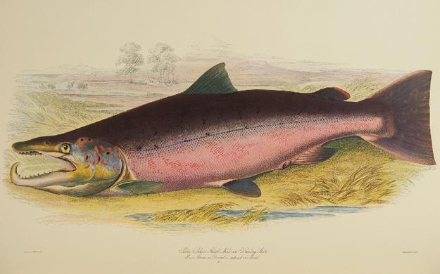 Sir William Jardine, Baronet, British Salmonidae.  London.  Est.  $150-250