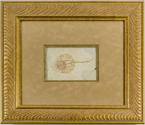 Baby stingray fossil, probably from the Green River formation, 6.5 inches by 4 inches and framed (est.  $700-$2,000).