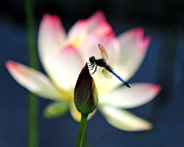 Andrea Braunfeld, Dragon Fly Resting, Archival Pigment Print, 16'' x 20''