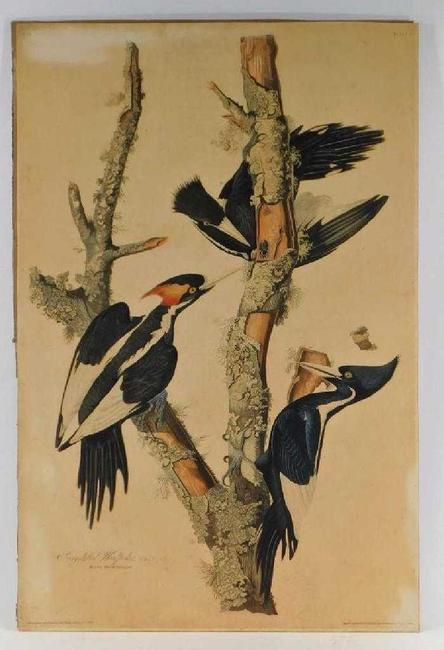 Two original hand-colored etchings by John James Audubon (Haitian-American, 1785-1851) were offered, including this one titled Ivory-Billed Woodpeckers ($46,250).