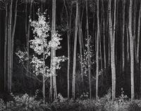 Ansel Adams (1902-1984) Aspens, Northern New Mexico, 1958 Gelatin silver print, printed between 1973 and 1977, signed in pencil on the mount; title, date in ink and his Carmel credit stamp on the mount verso.  15 x 19 1/8in Est $20,000-30,000