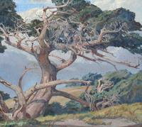 "Carl Oscar Borg (1879 - 1947) ""Monterey Cypress"" Oil on canvas, 36 1/2 x 40 1/4 inches AVAILABLE NOW"