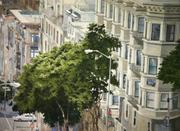 Duane Anderson, Trees of SF(1), Watercolor on Paper, 22'x 30'