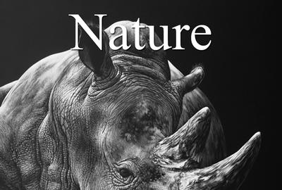 8th Annual Nature Online Art Competition