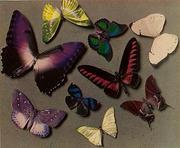 Man Ray (American, 1890 - 1976) [Butterflies], 1935 American Carbro print © Man Ray Trust ARS-ADAGP, The J.  Paul Getty Museum, Los Angeles