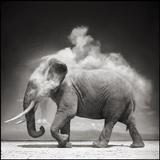 Elephant with Exploding Dust, Amboseli, 2004.  Archival Pigment Ink Photograph on Paper.  27 x 27 inches.  Promised Gift of Lynn and Foster Friess, National Museum of Wildlife Art.  Photo credit: © Nick Brandt.