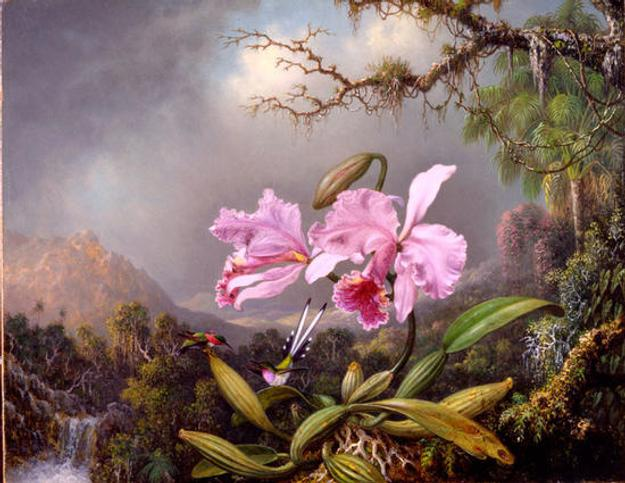 Martin Johnson Heade ( 1819–1904) Study of an Orchid, 1872.  Oil on canvas.  New-York Historical Society, The Robert L.  Stuart Collection, S-112.