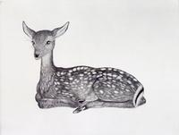 Kiki Smith, Fawn, 2001.  Etching and aquatint.  Purchase with General Acquisitions Fund and funds from Elaine L.  Levin and Diane Wisebram and gift of Stephen Dull.  Published by Harlan & Weaver, New York.