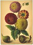 FROM AN EXTRAORDINARY COLLECTION OF 20 BOTANICAL PICTURES BY CARL AND HENRY ULKE