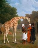 Jacques-Laurent Agasse (1767-1849) The Nubian Giraffe, 1827 The Royal Collection © 2011, Her Majesty, Queen Elizabeth II