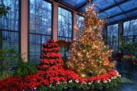A giant, live Christmas tree is featured every year at Yuletide at Winterthur, continuing a favorite tradition of founder Henry Francis du Pont.