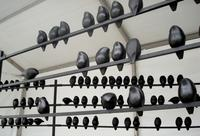 "Courtesy Photo Valeria Yamamoto Sculptures ""Untitled"" Installation/400 birds, Casting on Hydrocal"