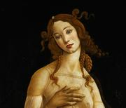 Sandro Botticelli and workshop, Venere (Venus) [HALF BODY DETAIL], Oil on canvas, transferred from wood panel, Galleria Sabauda, Turin, inv.  172.