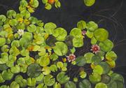 "Waterlilies (Getty Museum) Watercolor, 34"" x 48"""