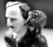 Poe and raven. Photo: Flickr