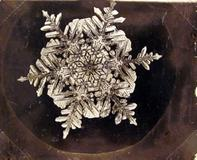 Carl Hammer Gallery is exhibiting 19th-century snowflake images by pioneering photographer Wilson A.  Bentley ($4,800 each) at The American Antiques Show.