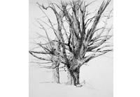 "T.  Allen Lawson, Spring Maples, May 2007, Negra Lead and graphite on paper, 25.5"" x 22"""