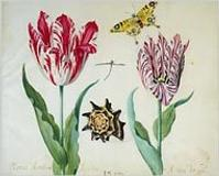 """Tulips in Amsterdam"" opens June 1 at the Rijksmuseum.  (NY Times blog)"