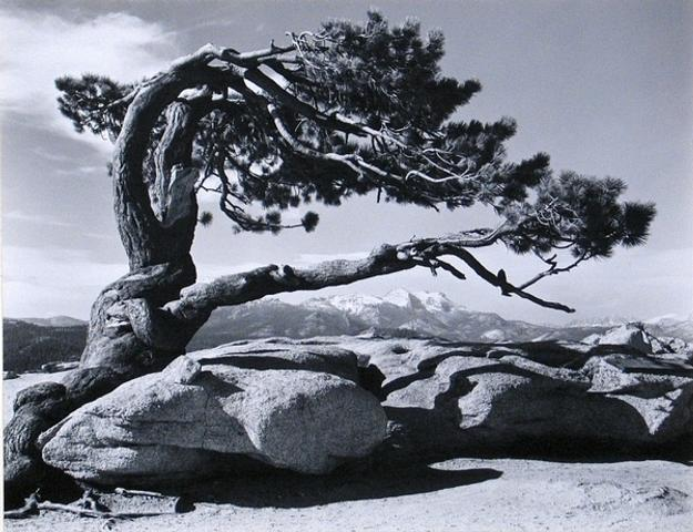 "Ansel Adams' ""Jeffrey Pine, Sentinel Dome, Yosemite"" could bring $2/3,000 at Bonhams & Butterfields on Sept 19th."