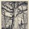 "Platt Hubbard (1889 - 1946) Giant Oak signed, Platt Hubbard, and dated Old Lyme, 1932, lower right inscribed: for Caro, lower left etching on paper 10"" x 6 3/4"""