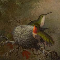Martin Johnson Heade's Two Ruby Throats by Their Nest, 5 ½ by 6 ⅜inches, sold for $212,500.