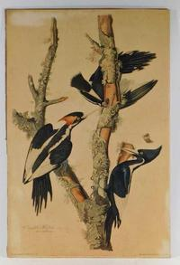 Two original hand-colored etchings by John James Audubon (Haitian-American, 1785-1851) will be offered, to include Ivory-Billed Woodpeckers (est.  $6,000-$9,000).