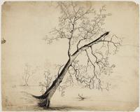 Thomas Cole, Button Wood Tree, Ink on paper, 13 1/2″ x 16 7/8″, The Albany Institute of History & Art, Gift of Mrs.  Florence Cole Vincent, 1958.28.36.