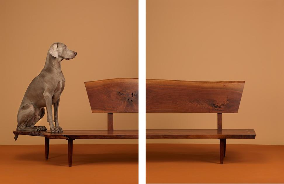 william wegman Ever seen dogs treated as art supplies william wegman moves a weimaraner across a platform as if the creature were an 80-pound barrel of gesso the art supply in question, chundo, a 10-year-old male and son of fay ray, endures the process with a matter-of-factness, never dropping his straight.