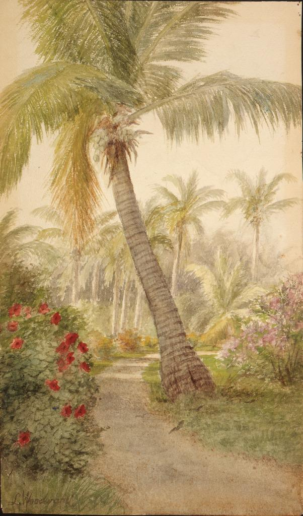 Laura Woodward (American, 1834-1926) Path with palm and blossoms, ca.  1890s. Watercolor. Flagler Museum, Palm Beach, Florida.