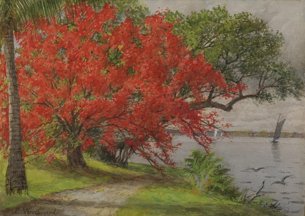 Laura Woodward (American, 1834-1926) Royal Poinciana at Lake Worth, ca.  1889.  Watercolor.  The Cici and Hyatt Brown Museum of Art at the Museum of Arts & Sciences, Daytona Beach