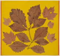 Leaf Study III, c.  1940 Leaves and colored paper 18 x 18 5/8 inches (45.7 x 47.3 cm) © 2017 The Josef and Anni Albers Foundation.  Courtesy David Zwirner, New York/London