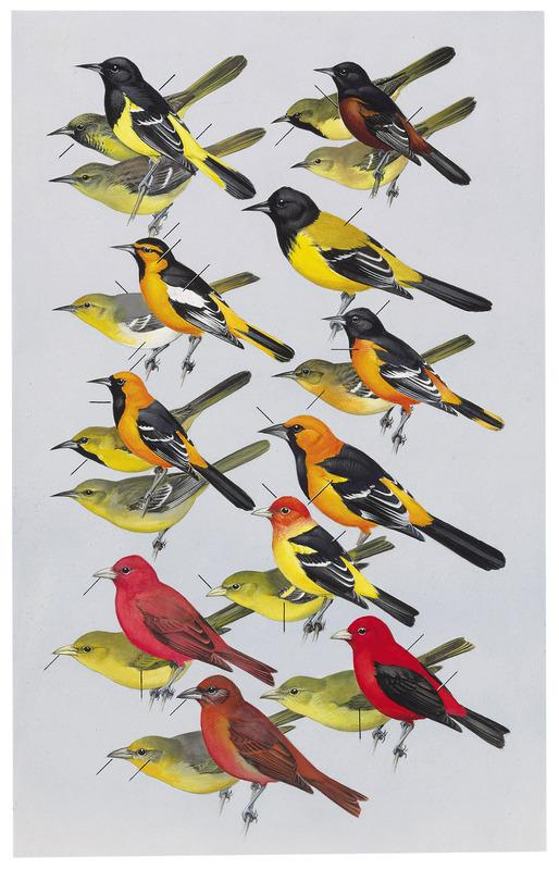 peterson field guide to birds of texas roger tory peterson