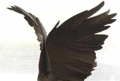 A Jules Moigniez signed bronze eagle statue ($500-2,000) depicts an eagle in mid-flight with one feet on a branch, 31 ½ inches tall.