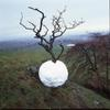Hawthorn Tree Snowball, 2001, two C prints, 33 x 33 in.  each © Andy Goldsworthy.