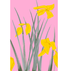 Alex Katz, Yellow Flags 3, 2020, Archival pigment inks on Crane Museo Max 365 gsm paper.  Edition of 150, Signed, numbered and dated in pencil, 33 x 22 in.