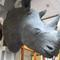 Stuffed rhino heads with valuable horns were stolen from Ireland's National Museum.