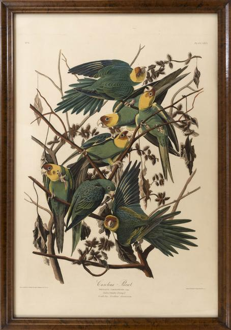 "Audubon elephant folio ""Carolina Parrot"", estimated at $65,000/85,000"