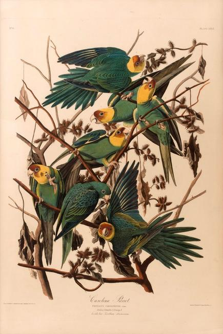 "J.J.  Audubon elephant folio ""Carolina Parrot"" sold for $78,000 at Eldred's Americana, Paintings and Maritime Art auction April 6-8, 2017."