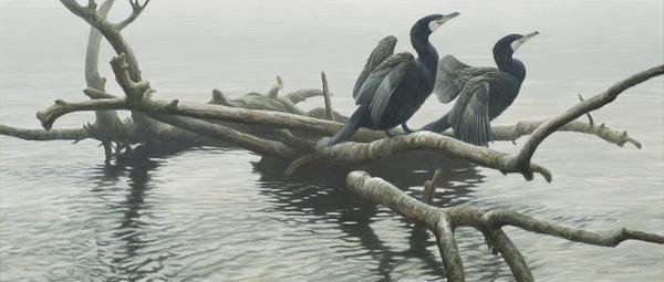 Robert Bateman (1930- ), Great Cormorants, acrylic on canvas, 26x60.jpg