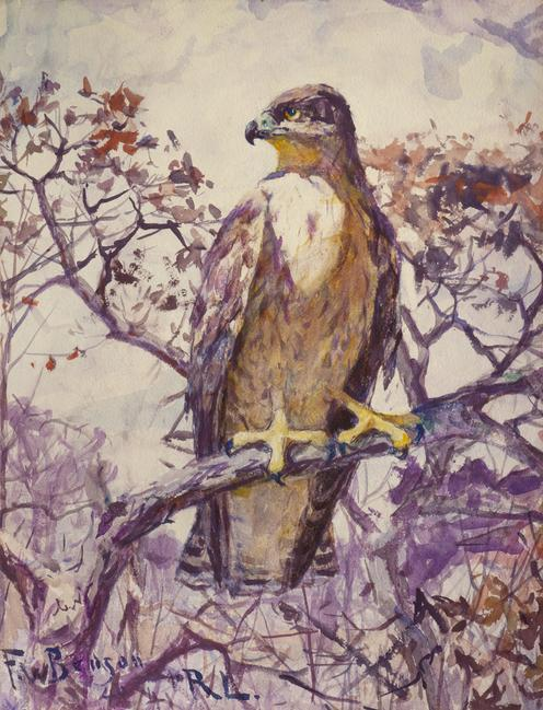 'Hawk' by Frank W.  Benson (1862-1951)