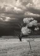 """Awaiting the Storm,"" photograph by Jacquelyn Etling"