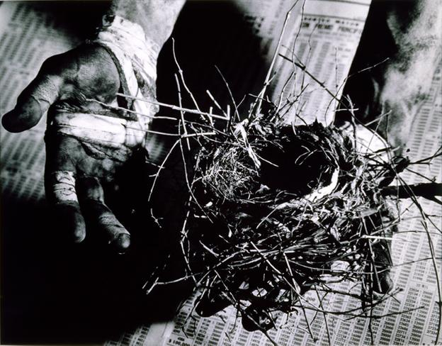 David Wojnarowicz, Untitled (hand holding nest) 1988, Silver print, 14 1/8 x 18 5/16 inches.  Courtesy of the Estate of David Wojnarowicz and P.P.O.W, New York.
