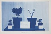 Frederick Coulson, American, 1869-1931, Untitled, March 1,1894, cyanotype, Eliza S.  Paine Fund, 2010.271.32