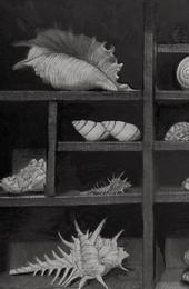 Shells, Cabinet of Curiosities, Pen and Ink by Robert Buratti