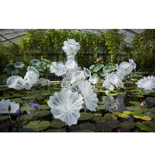 Dale Chihuly, Ethereal White Persian Pond (detail), 2018, 8 x 26 x 20' Royal Botanic Gardens, Kew, London, installed 2019, © Chihuly Studio.  All Rights Reserved.