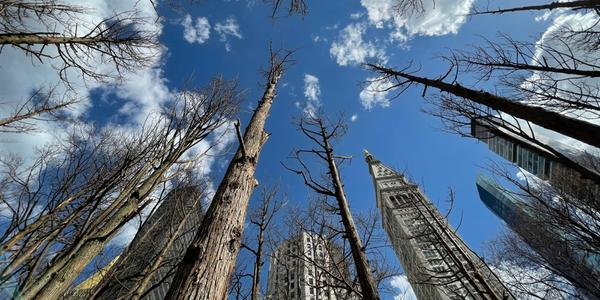 Maya Lin's Ghost Forest, 2021.  Courtesy of the artist and Madison Square Park Conservancy.  Photo: Maya Lin Studio