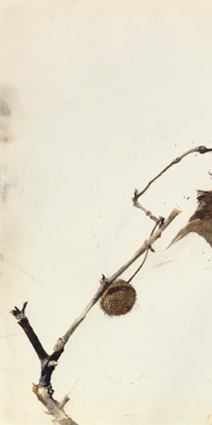 Buttonwood Leaf, 1981.  Andrew Wyeth (1917-2009).  Drybrush.  The Andrew and Betsy Wyeth Collection.  © 2018 Andrew Wyeth/Artists Rights Society (ARS), New York.